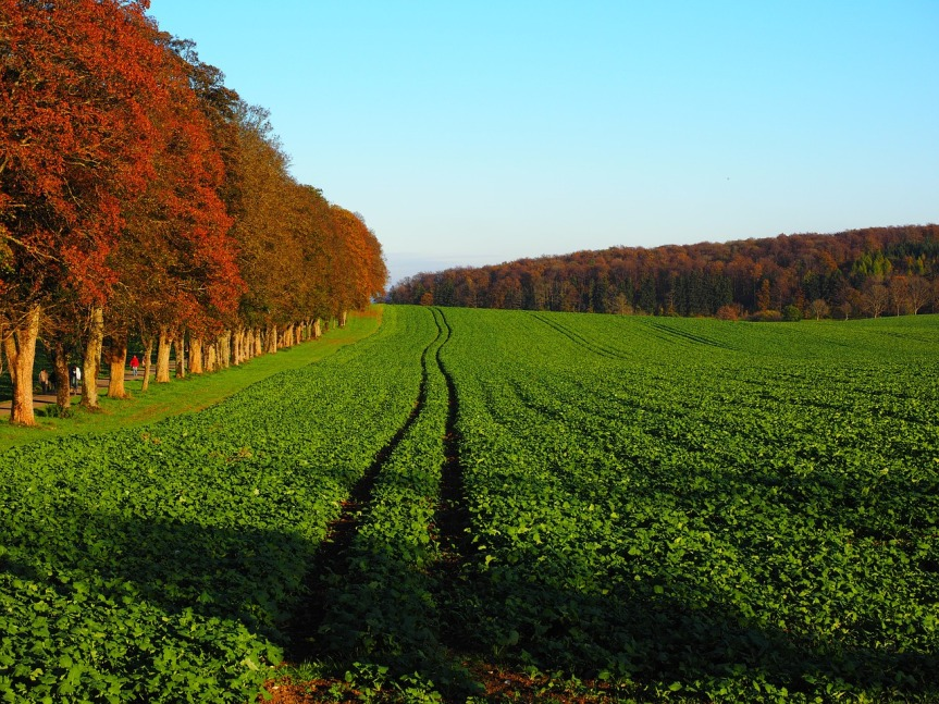 Pesticide free herbs and vegetables: Cover Crops#healthyliving