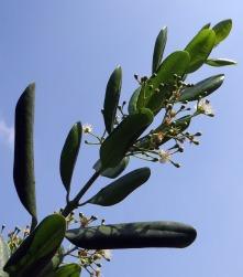 jamaica-pepper-674248_1280