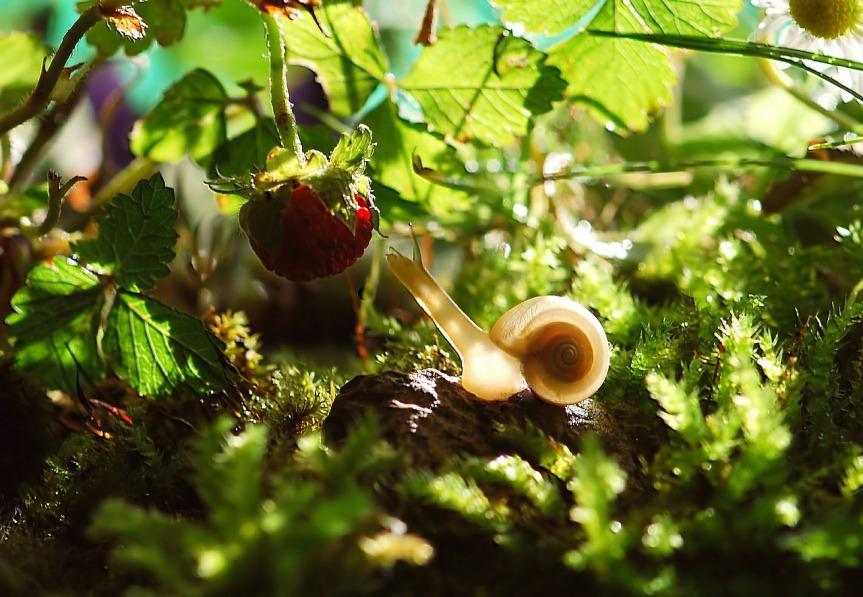 snail-582194_1280