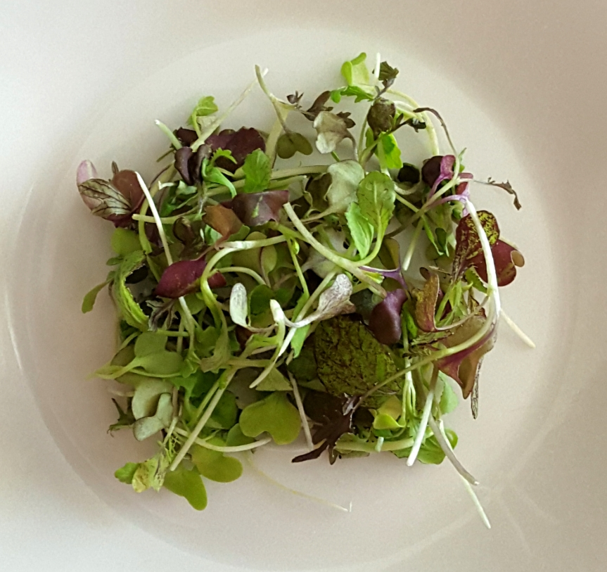 Flavor bombs – Microgreens #healthyliving